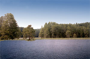 This photo illustration shows what Lake Munson should look like following the restoration project