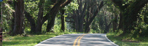 Live Oak trees overhanging a canopy road.