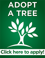 http://cms.leoncountyfl.gov/Home/Departments/Public-Works/Operations/Right-of-Way/Adopt-A-Tree
